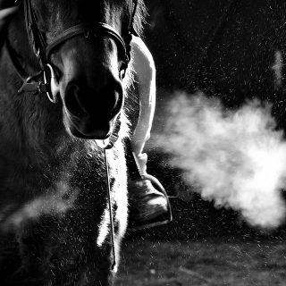equinox-paard-homepage